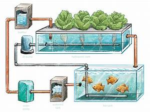 The Big Idea  Hydroponics  U0026 Aquaponics  U2013 Envision