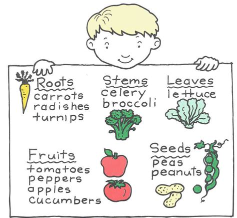 Plants Worksheets Eat All Parts Of A Plant Plus Plant Worksheets Cycle 1 Science Worksheets