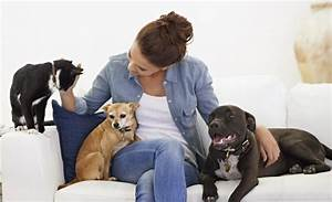 The benefits of being a pet sitter blog petcloud for Dog house sitting jobs