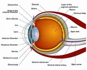 Structure Of Human Eye And Its Working And Defects In