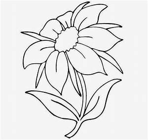 Pictures Of Flowers To Draw - Beautiful Flowers