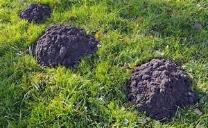 Maulwurf Bekämpfen Hausmittel : die besten 25 milben ideen auf pinterest parasit mikrobiologie und mikro nano ~ Yasmunasinghe.com Haus und Dekorationen