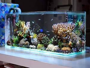 Indoor, Cool Saltwater Aquarium Design Ideas Picture ...
