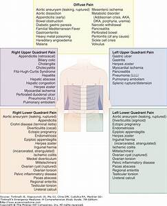 Left Upper Quadrant Pain Organs