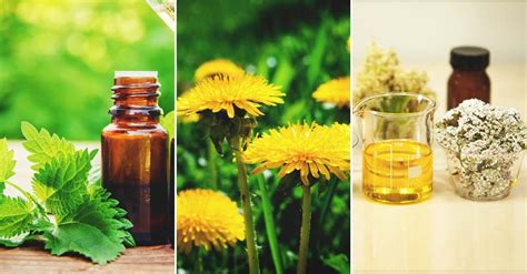 Can You A In Your Backyard by 15 Medicinal Weeds You Can Forage In Your Backyard