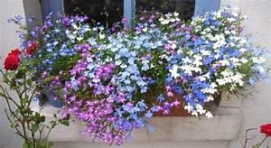 Blumenkübel Bepflanzen Sommer : fotos von euren fensterbank blumenk sten seite 1 terrasse balkon mein sch ner garten ~ Eleganceandgraceweddings.com Haus und Dekorationen