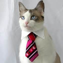 cats in ties on