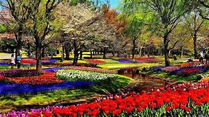 Enjoy Amazingly Beautiful Natural Flowers Garden Flower ...