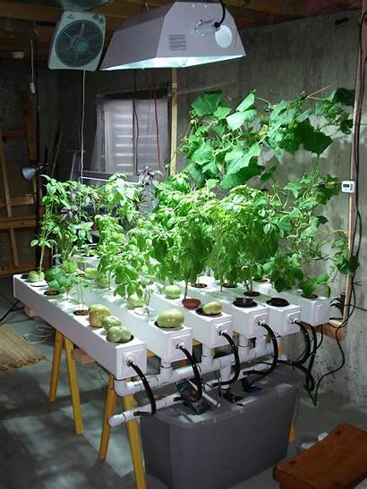 Hydroponic Indoor Gardening Vegetable Garden Grow Under