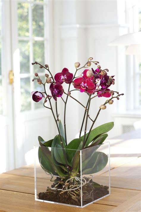 decorer cuisine toute blanche les fleurs d intérieur les orchidées en 40 images