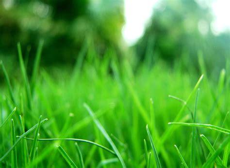 wallpaper de hierba verde