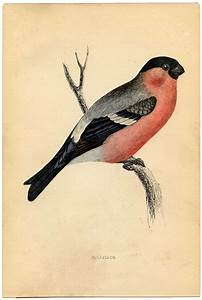 instant printable history pretty pink bird
