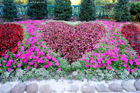 busch gardens customer service 7 tips for the day at busch gardens ta bay