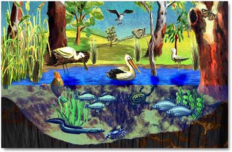 wetlands cliparts   clip art  clip