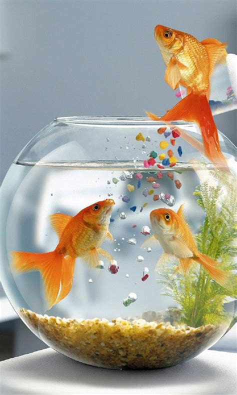 Animated Fish Aquarium Wallpaper Mobile - hd fishes mobile wallpapers for samsung galaxy samsung