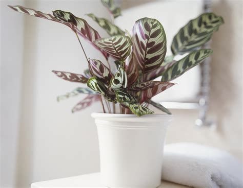 low light plants low light houseplants plants that don t require much light