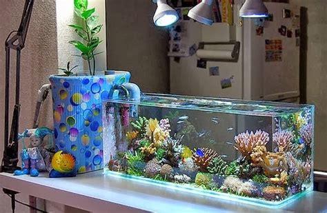 Membuat Aquascape Di Aquarium Bulat