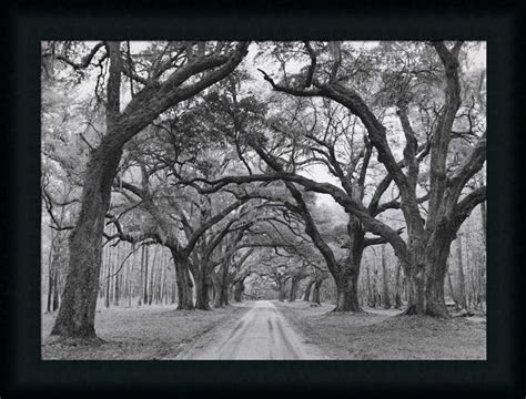 Oak Arches By Jim Black White Photography Framed Art Print