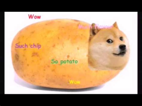 cuisines as doge as food