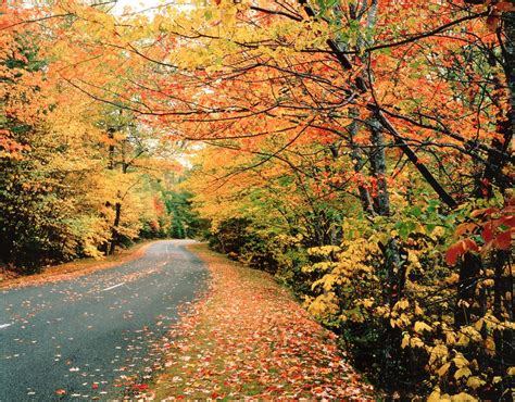 Best Maine Fall Foliage