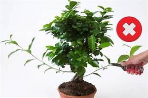 Ficus Bonsai Schneiden : welcome ~ Indierocktalk.com Haus und Dekorationen