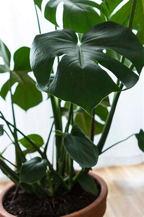 tropical house plants identification houseplants house