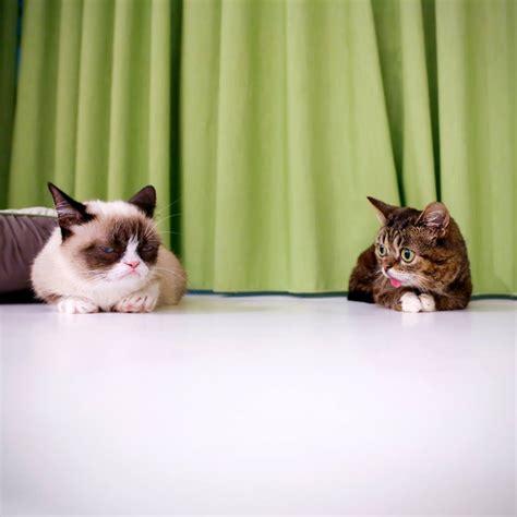 Grumpy Cat Meets Lil Bub (pic + Video)  Amazing Creatures