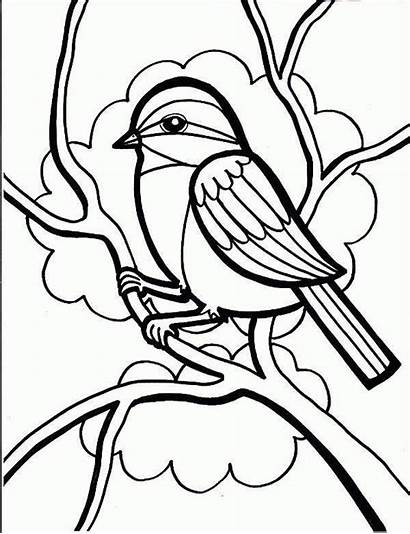 Bird Coloring Pages Printable Template Templates Colouring