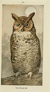 vintage owl illustration | Flora & Fauna | Pinterest