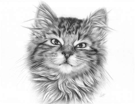 tabby kitten drawing  heather page
