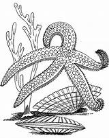 Starfish Coloring Pages Star Sea Fish Print Outline Drawing Adult Printable Colouring Colors Animal Getdrawings Getcolorings Recommended sketch template