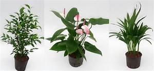 Hydrokultur Shop Online : hydrokultur pflanzen von d k hydropflanzen g rtner gregg shop ~ Markanthonyermac.com Haus und Dekorationen