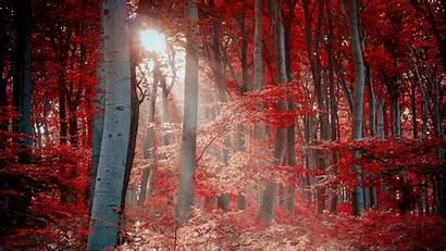 4k Autumn Desktop Wallpapers Tree Forest Trunk
