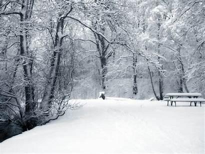 Winter Backgrounds Wallpapers Desktop Computer Snow Forest