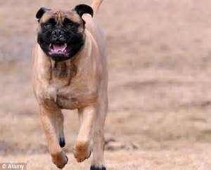 Dogs On Steroids | www.pixshark.com - Images Galleries ...