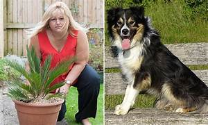 Groupon-bought poisonous palm tree leads to a dog dying in ...