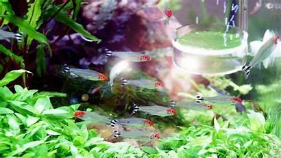Aquarium Fish Tank Backgrounds Wallpapers Underwater Plants