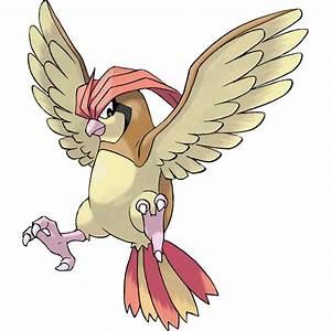 Pidgeotto (Pokémon) - Bulbapedia, the community-driven ...