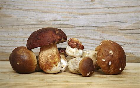 Come Cucinare I Funghi by 5 Modi Per Cucinare I Funghi Porcini