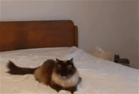 cat boop gifs tenor