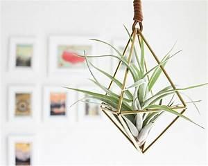 Plante Suspendue Intérieur : la plante tillandsia comme d coration d 39 int rieur ~ Teatrodelosmanantiales.com Idées de Décoration