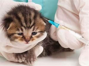 Le vaccinazioni del gatto Quando e perché