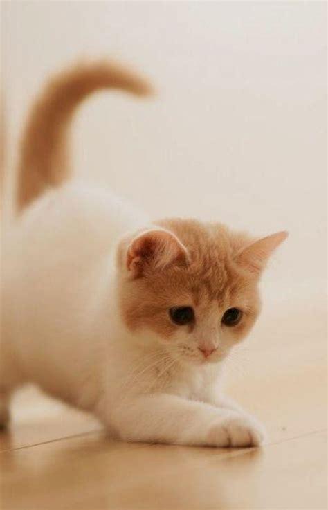 wallpaper lucu kucing pink moa gambar