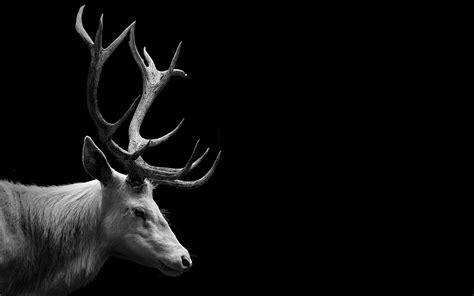 Deer Animal Wallpapers Hd