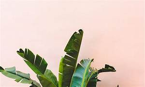 Trends: 8 Leaves To Love + Tropical Leaf Decor Ideas — decor8