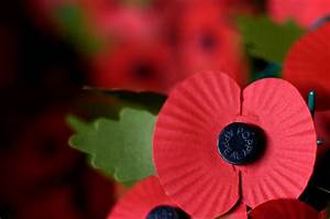 Poppy appeal 2017: Poignant poem launches Royal British ...