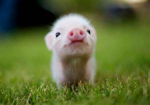 Cute Pink Piglet Baby Animal Pixel Popular Hd 1920x1200px ...