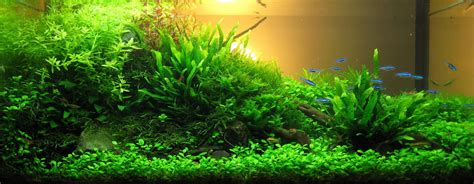 Planted Aquascape by Tobias Coring And Aquascaping Aqua Rebell