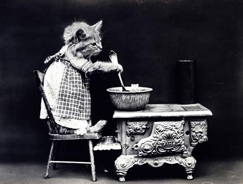 Cat Dressed Vintage Photo Free Stock Photo  Public Domain Pictures