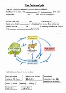 Carbon cycle by sian_jones - Teaching Resources - TES